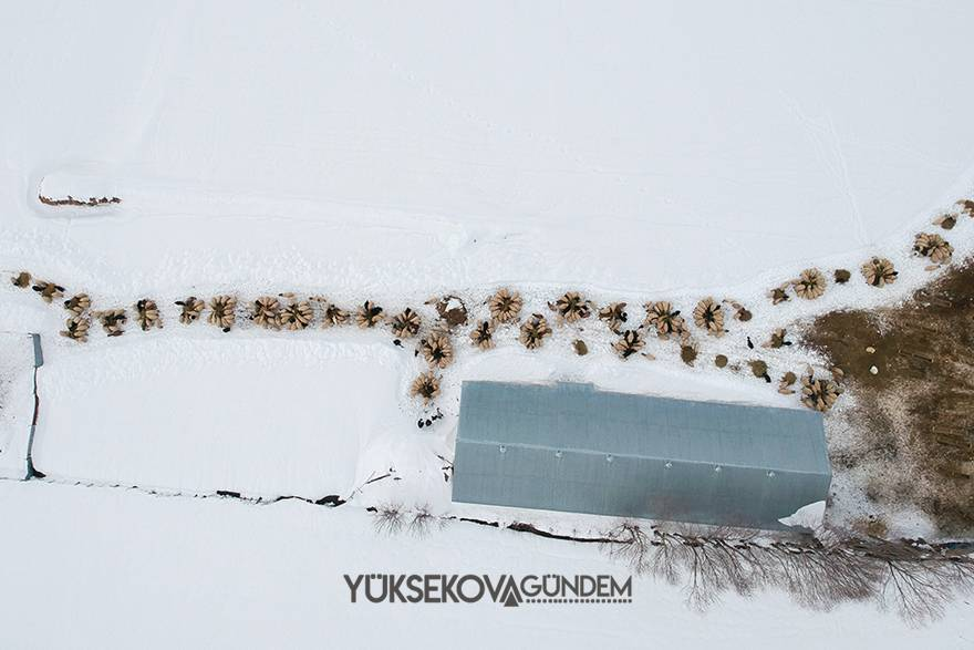 Yüksekova: besicilerin zorlu kış şartlarıyla mücadelesi 1