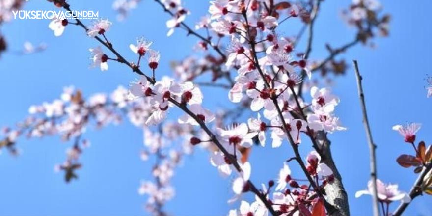 Baharın müjdesi cemrelerin ilki havaya düştü