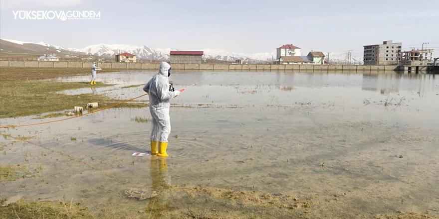 Yüksekova Belediyesinden larvasit ilaçlama çalışması