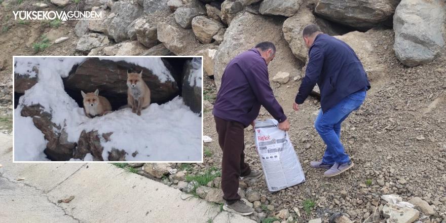 Hakkari'nin maskotu tilkiler için yiyecek bırakıldı
