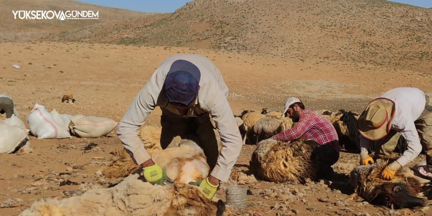 Van'da koyunların kırpma zamanı başladı