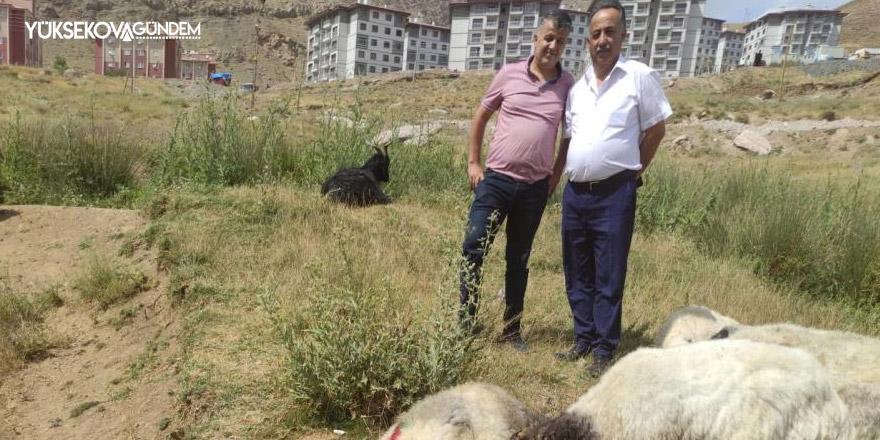 Hakkari'de kurban satış ve kesim yerleri belli oldu