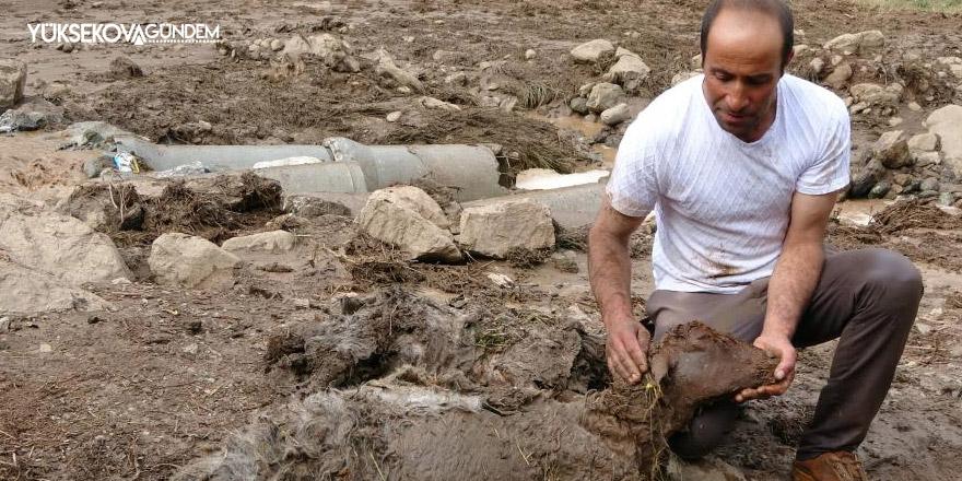 500 koyun sele kapıldı, telef oldu ve kayboldu