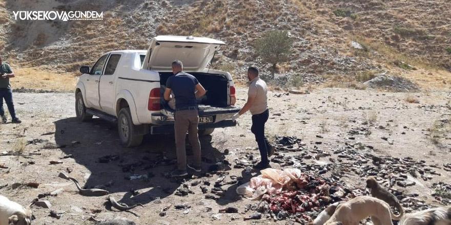 Hakkari'de sokak hayvanlarına sakatat bırakıldı