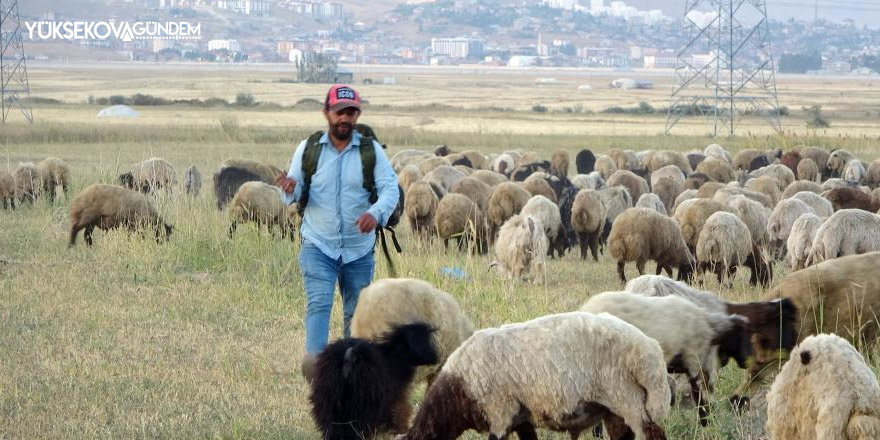 Yüksekova'da etkisini sürdüren kuraklık çobanları da vurdu