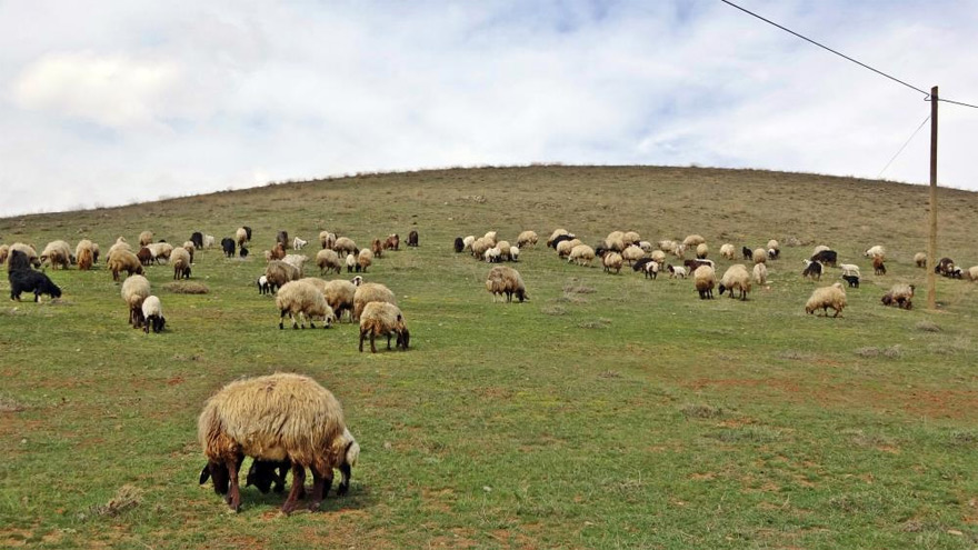 koyunlar1.jpg