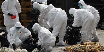 10 bin tavuk kuş gribi nedeniyle itlaf edildi