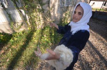 Yüksekova'da 'öreke 'teşi' geleneği' sürdürülüyor