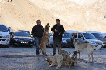 Hakkari'li esnaf 10 köpeğe sahiplendi