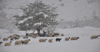 Beklenen kar yağmayınca çiftçiler zor günler yaşadı