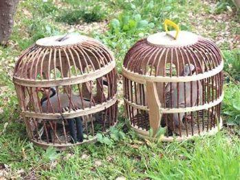 Kafesle keklik avlayanlara ceza yağdı