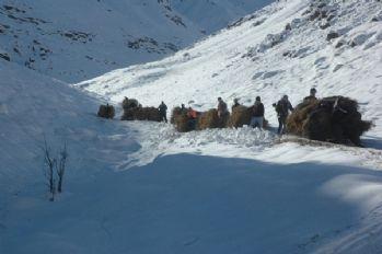 Hakkari'nin karlı dağlarında ot taşıma çilesi başladı