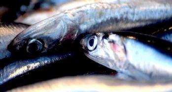 Balıkçılar en az 2 yıllık av yasağı istiyor