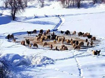 Kar yağışı çiftçileri sevindirdi!