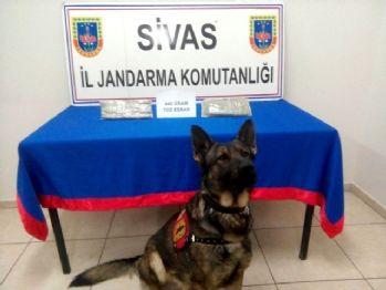 Van'dan İstanbul'a gidiyordu, Sivas'ta yakalandı