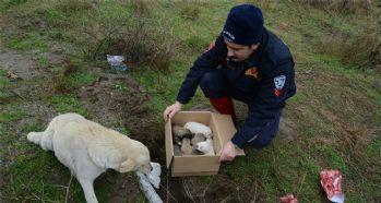 Kuyuya düşen köpekler kurtarıldı