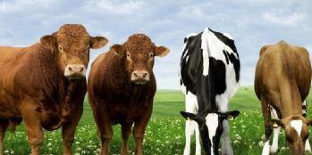 Tarım ve Hayvancılığa 38 milyonluk destek