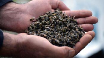 Dört ilde binlerce bal arısı öldü