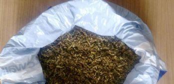 250 gram bonzai ele geçirildi