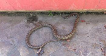 Çamaşır sepetinden yılan çıktı