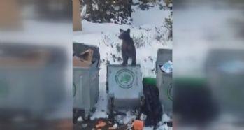 Aç kalan ayı çöpte yiyecek aradı