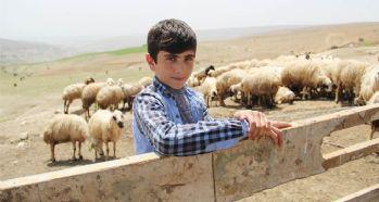 Çobanlık yapan Habib'in TEOG başarısı