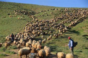 Yüksekovalı çobanların iftar sofrası