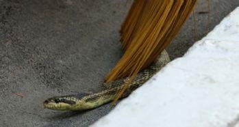 Şehrin ortasında yılan paniği
