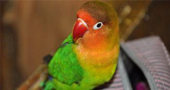 Bu papağan görenleri şaşkına çeviriyor