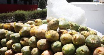Yazın devası dikenli incir sezonu açıldı