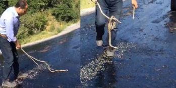 Sıcaktan eriyen asfalta yapışan yılanı vatandaş kurtardı