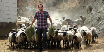 Yurtdışından beşiz doğuran koyun getirdi