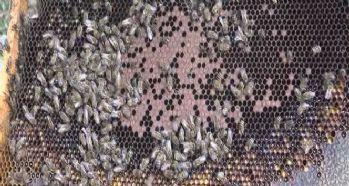 Arıcılar arılarını kışa hazırlamaya başladı