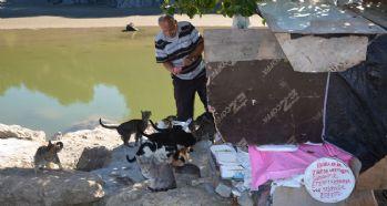 19 yıldır emekli maaşını kediler için harcıyor
