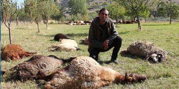 Uyuyakalan çoban gözlerini açtığında şoke oldu