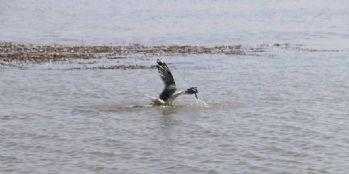 Sıhke Gölü'ndeki kirlilik canlıları tehdit ediyor