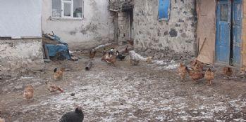 2 Köyde kuş gribi paniği