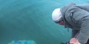 Göle kaçan danayı balıkçılar kurtardı