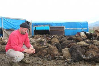 Havasız kalan 100 koyun telef oldu