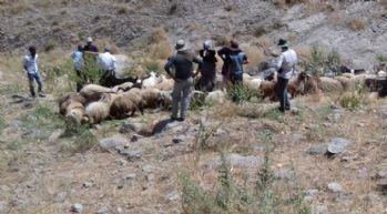 Koyun sürüsünden ayrılan oğlaklar kayıplara karıştı