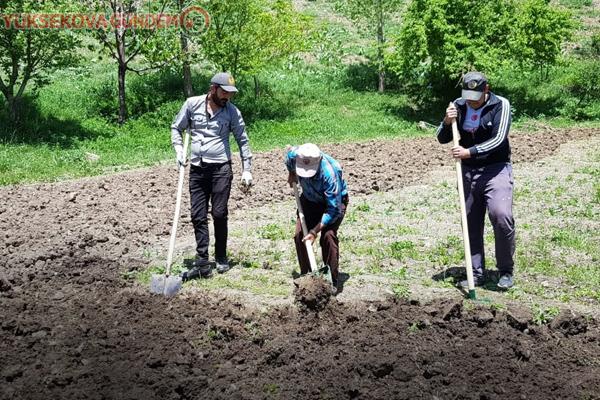 Tarlalarını kürekler ile kazarak ekime hazırlıyorlar