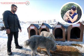 Avusturya'da yaşayan hayvansever kadından Yüksekova'ya köpek barınağı